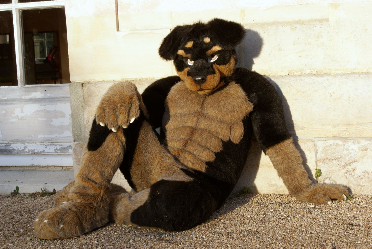 Dog Suits For Sale