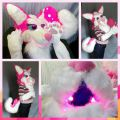 Light-Up Pink Husky